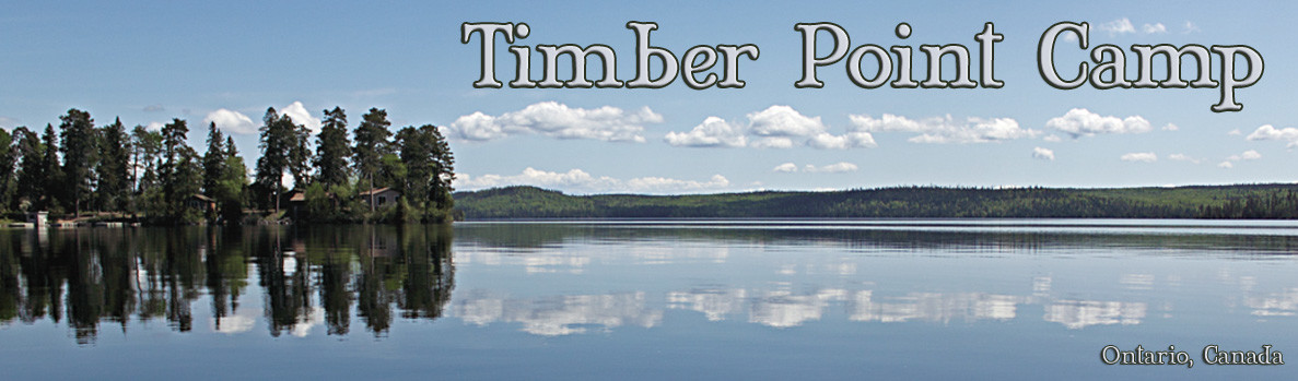 Timber Point Camp